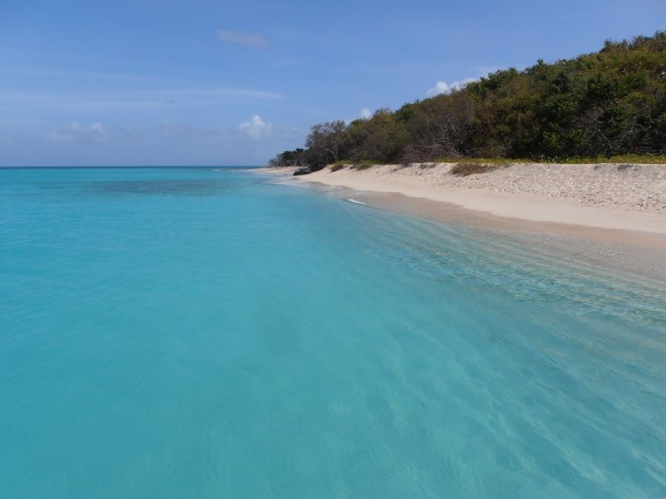 The beautiful white beaches and turquoise water off Buck Island, St Croix – photo Sue Pelling
